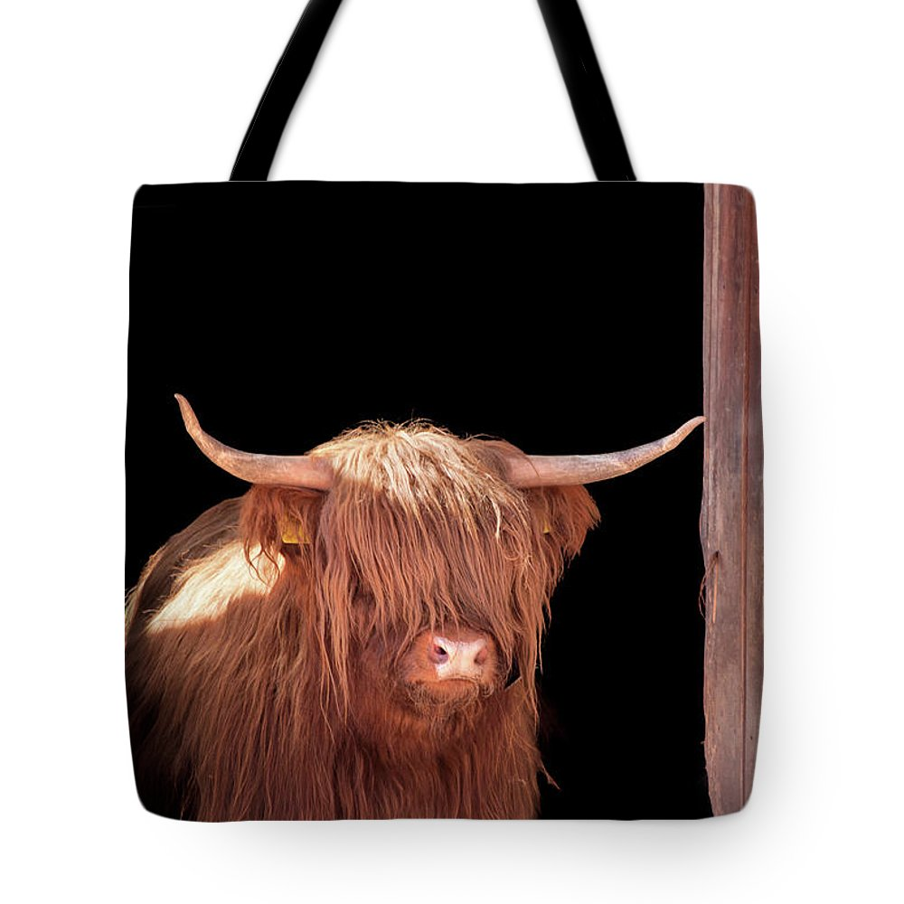 Horned Tote Bag featuring the photograph Highland Cattle In Barn Door by Kerrick