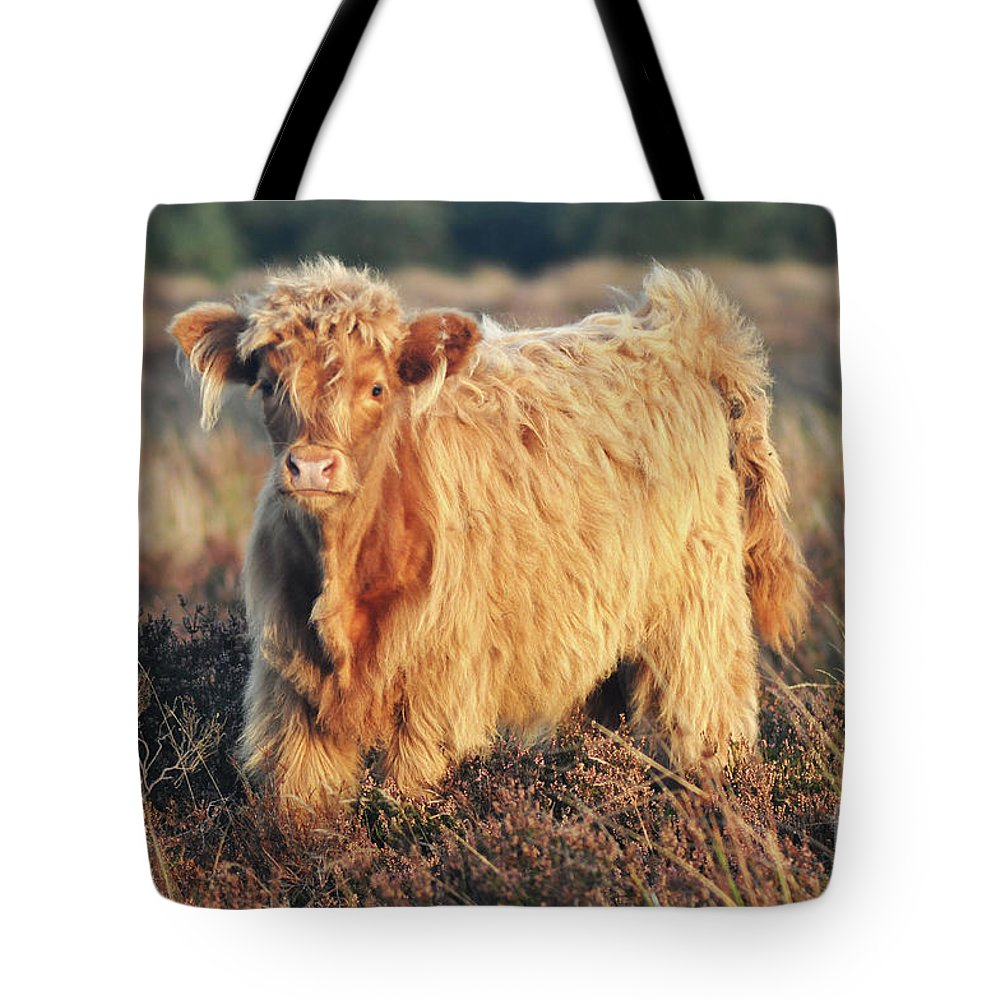 Highland Cow Tote Bag featuring the photograph Highland Cattle by Yhun Suarez