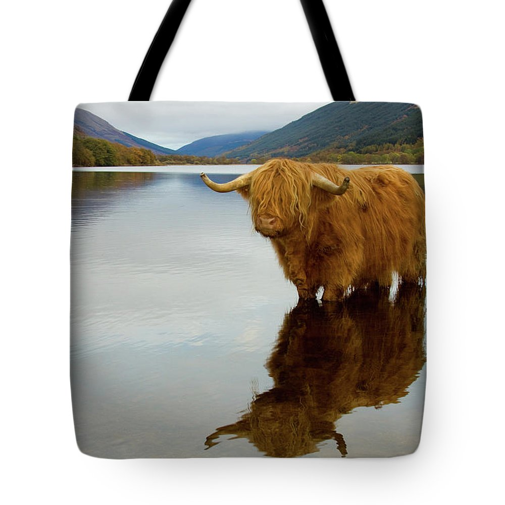 Horned Tote Bag featuring the photograph Highland Cow by Empato