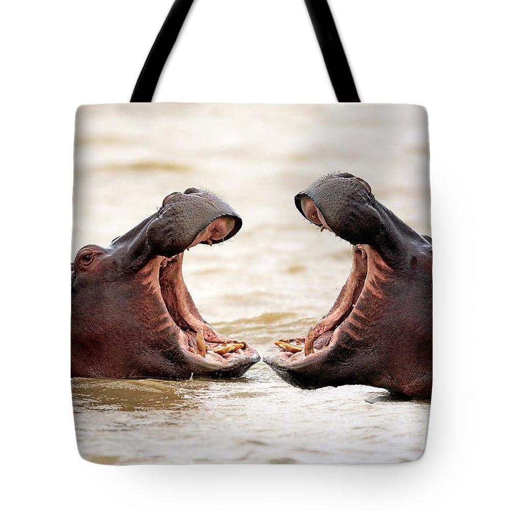 Isimangaliso Wetland Park Tote Bag featuring the photograph Hippopotamus by Tier Und Naturfotografie J Und C Sohns