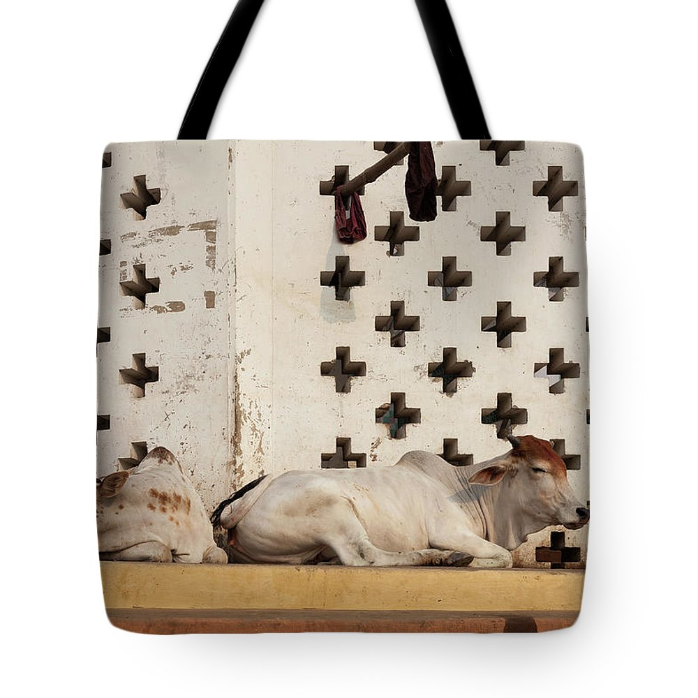 Hanging Tote Bag featuring the photograph Holy Cows Resting With Geometrical by Marji Lang