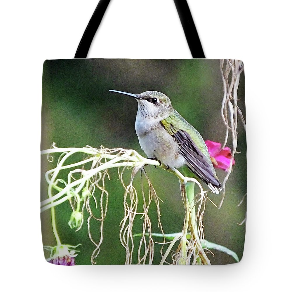 Nature Tote Bag featuring the photograph Hummingbird 105 by Lizi Beard-Ward
