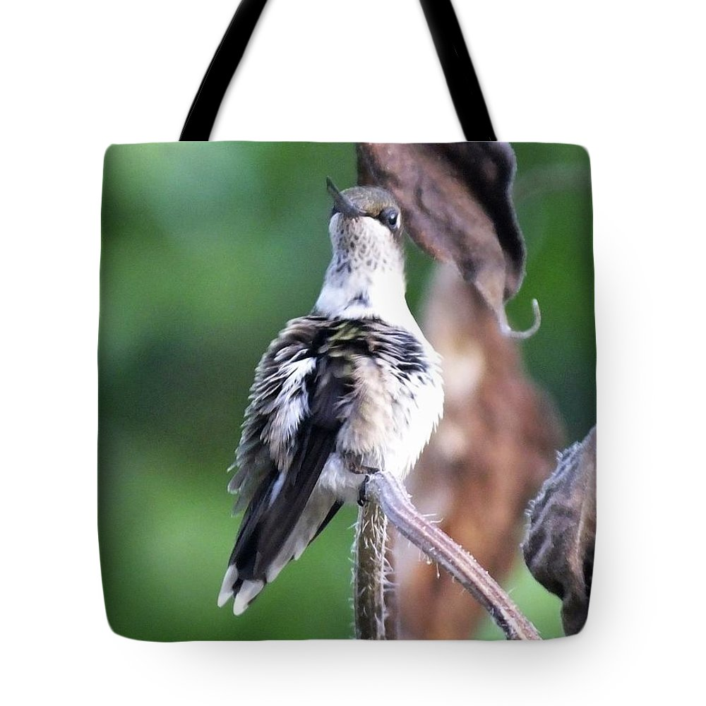 Female Tote Bag featuring the photograph Hummingbird 81 by Lizi Beard-Ward