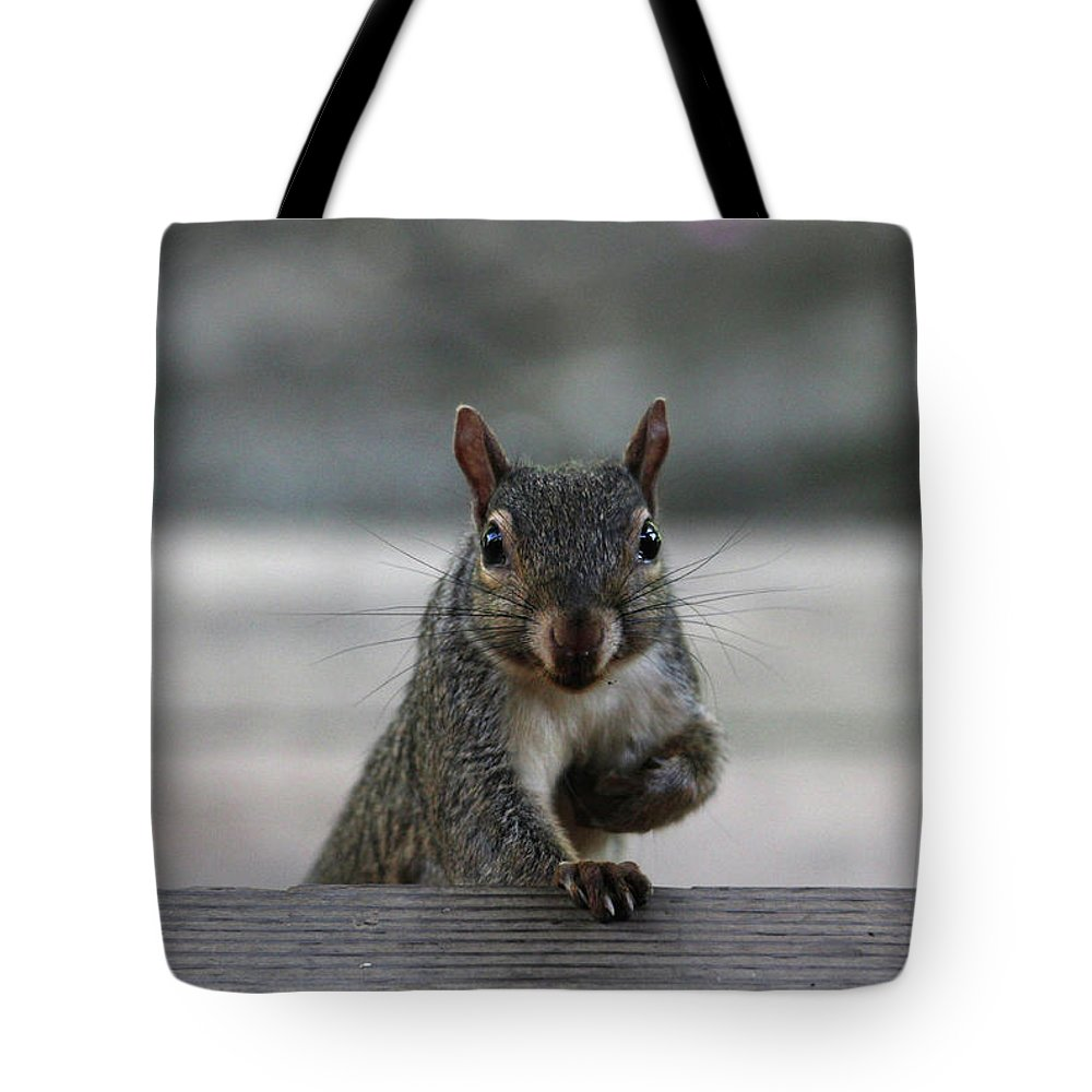 Squirrels Tote Bag featuring the photograph I Am Back by Trina Ansel