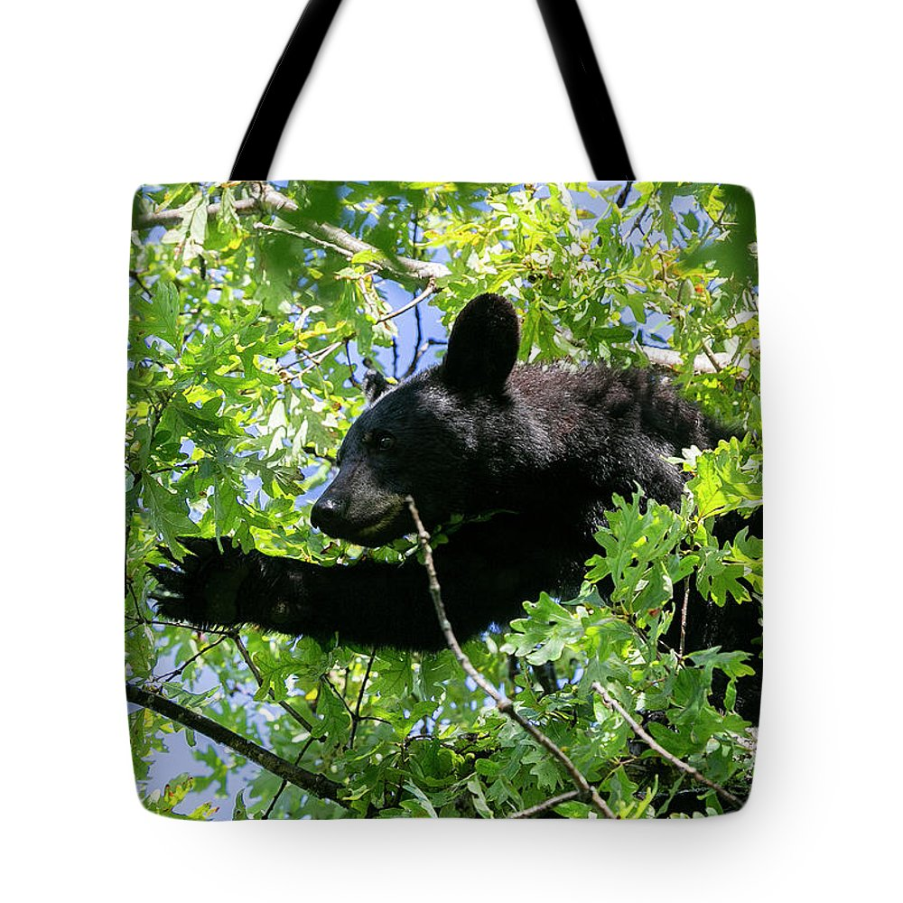 Bear Tote Bag featuring the photograph I Want That Acorn by Rodney Cammauf