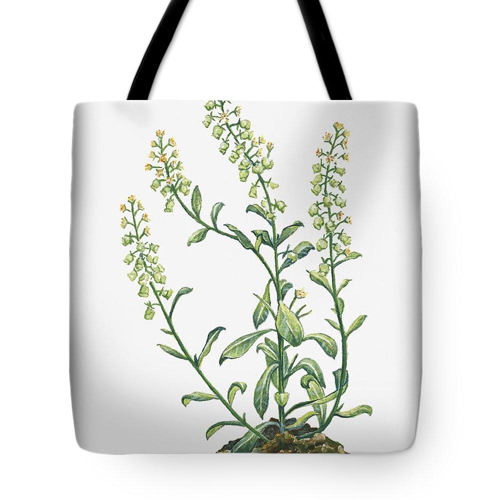 Long Tote Bag featuring the digital art Illustration Of Reseda Odorata Garden by Dorling Kindersley