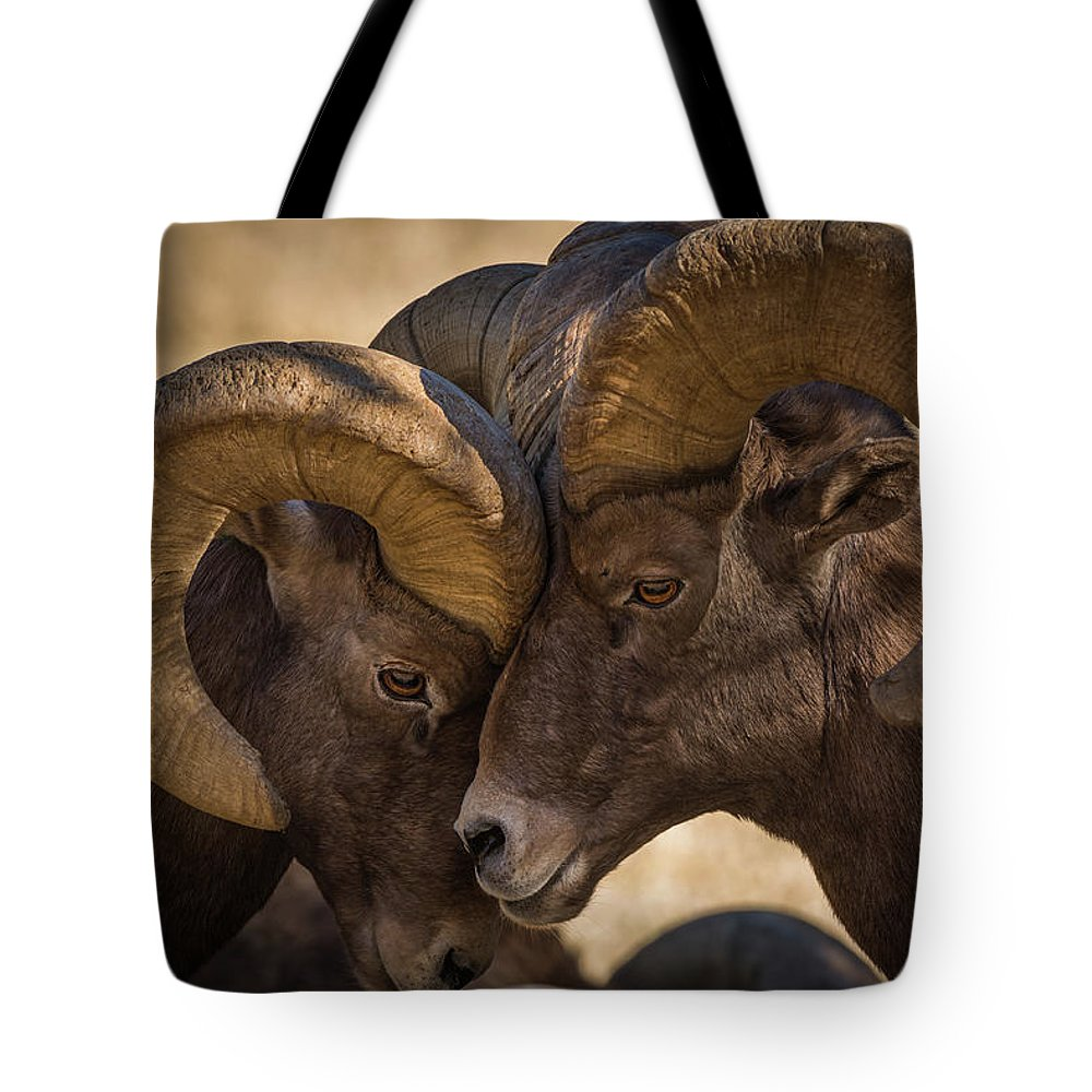 Bighorn Tote Bag featuring the photograph I'm Gonna Lean Up Against You, You Just Lean Right Back Against Me. by Gary Kochel