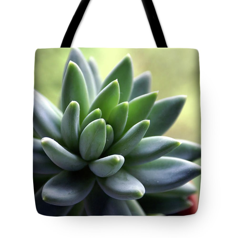 Agave Tote Bag featuring the photograph In Focus View Of Green Houseplant With by Dorin s