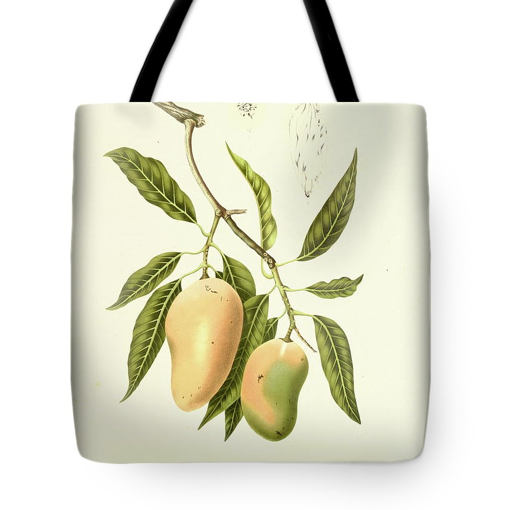 Artist Tote Bag featuring the digital art Indian Mango | Antique Plant by Nicoolay