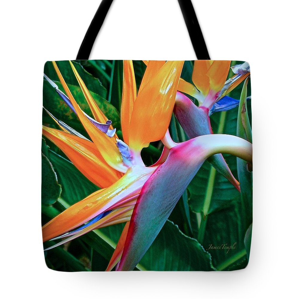Bird Of Paradise Tote Bag featuring the photograph Intertwine by James Temple