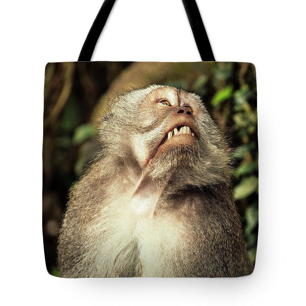 Kekak Tote Bag featuring the photograph It's Too High by Felipe Queriquelli