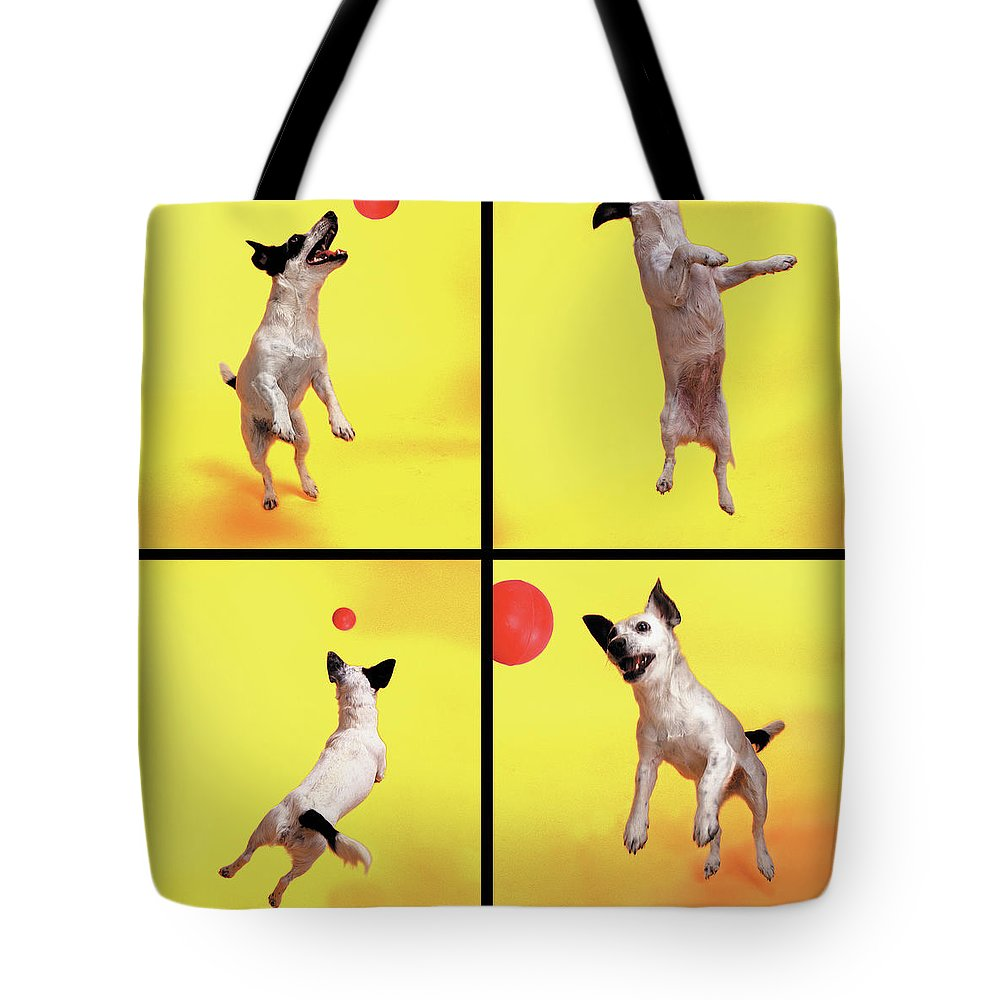 Pets Tote Bag featuring the photograph Jack Russell Jumping For Ball by Photodisc