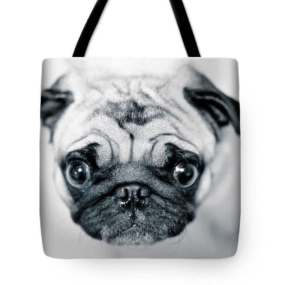 Pets Tote Bag featuring the photograph Just Enough by Eddy Joaquim