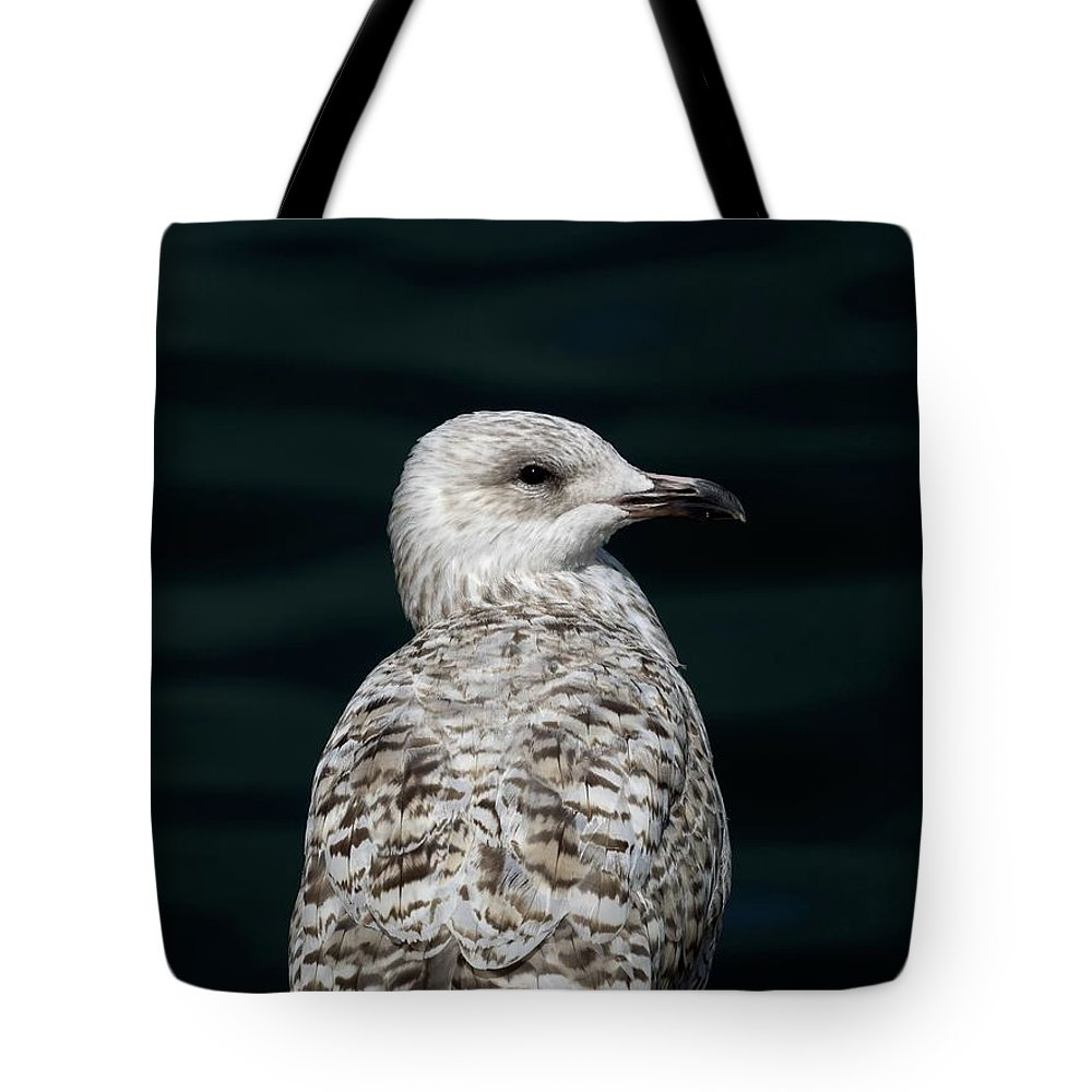 Tote Bag featuring the photograph Juvenile With Attitude by James Lamb