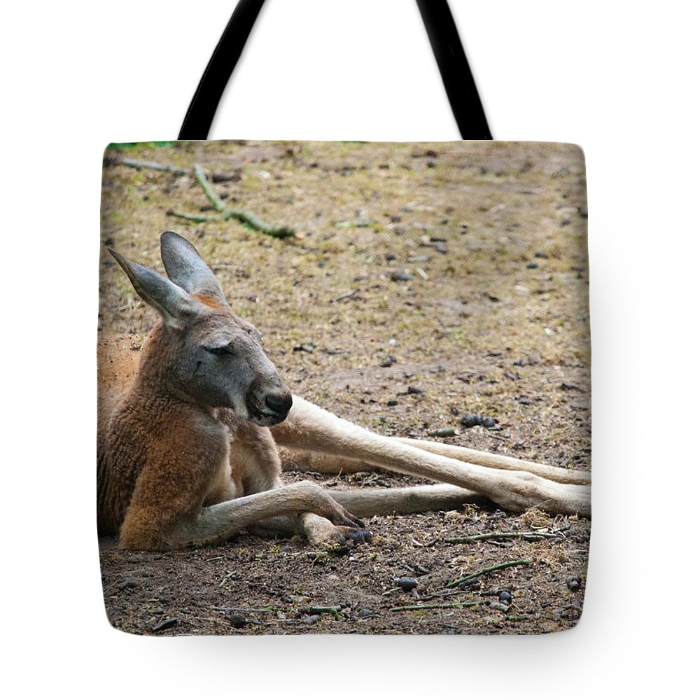 Animal Themes Tote Bag featuring the photograph Kangaroo by Elizabeth Livermore
