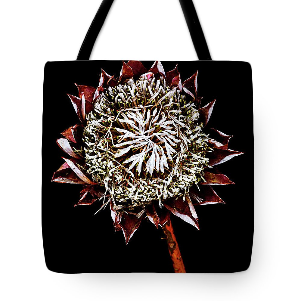 Black Background Tote Bag featuring the photograph King Protea Top by Chris Stein