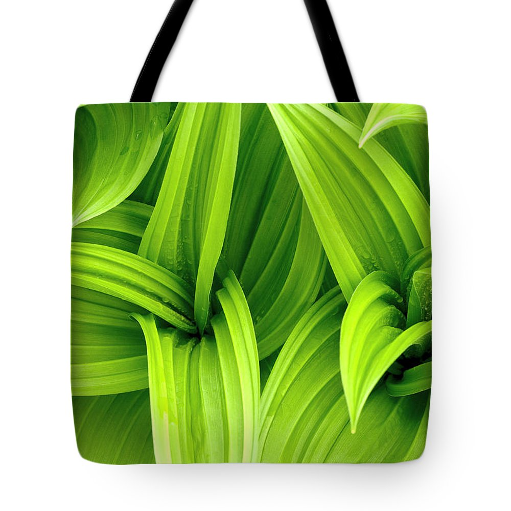 Grass Tote Bag featuring the photograph Leaves Drops Green by Vladimirovic
