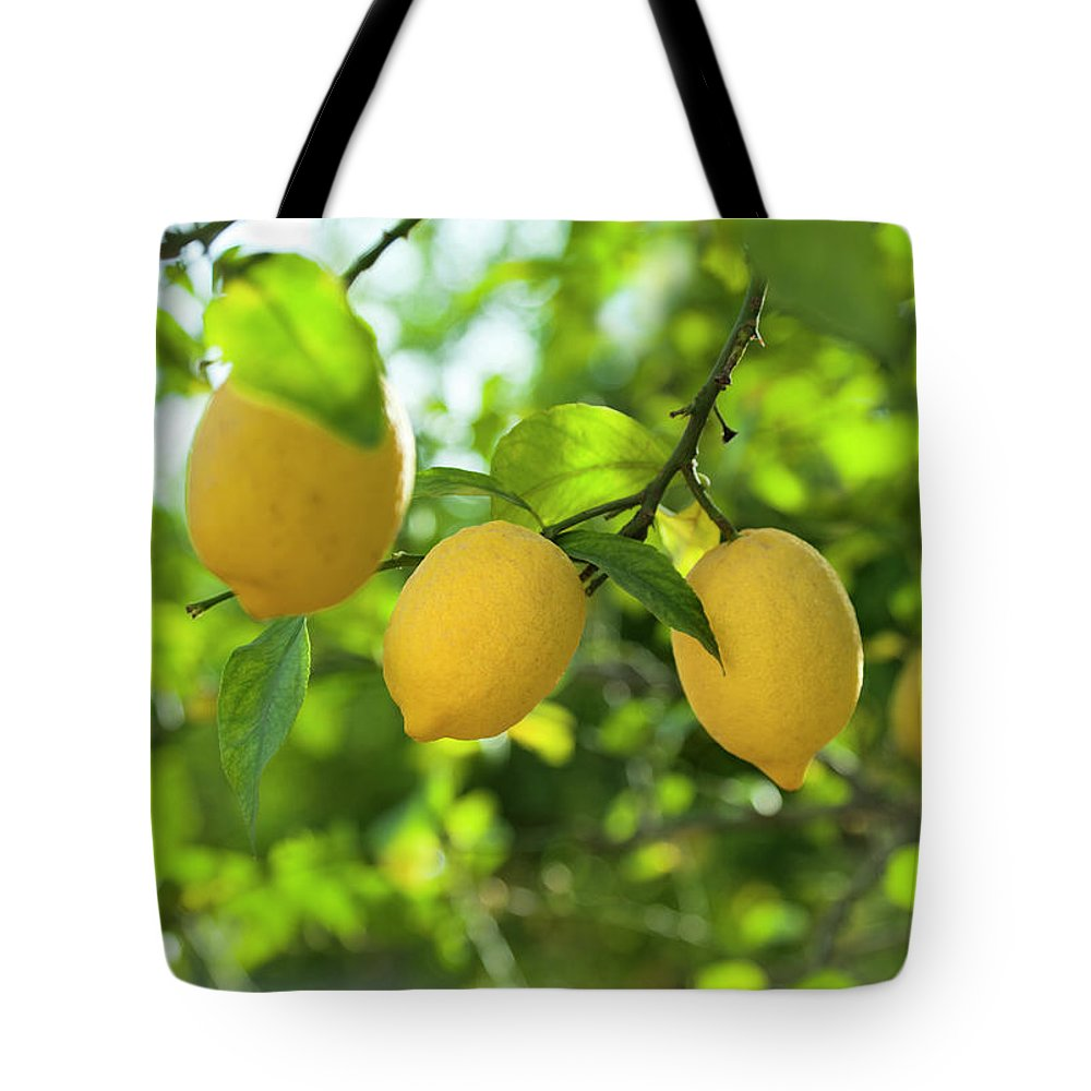 Vitamin C Tote Bag featuring the photograph Lemon Fruits In Orchard by Brzozowska