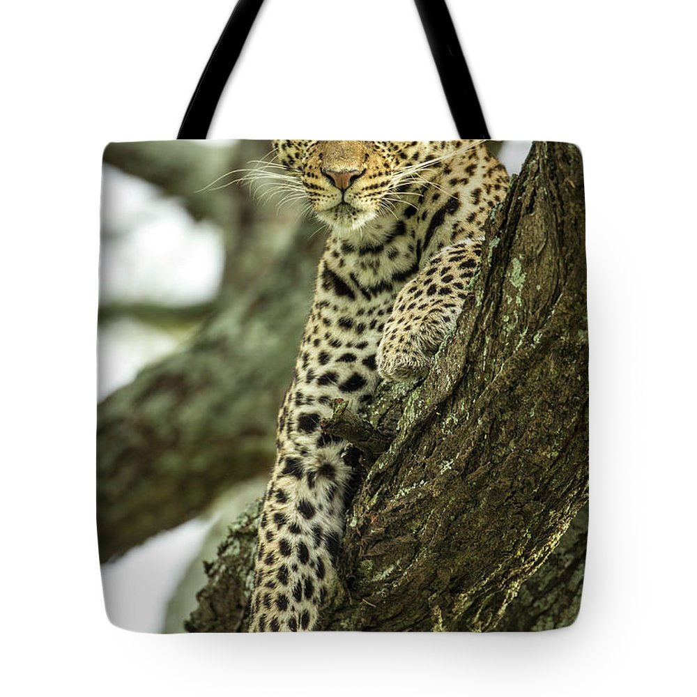 Dawn Tote Bag featuring the photograph Leopard, Ndutu Plains, Tanzania by Paul Souders