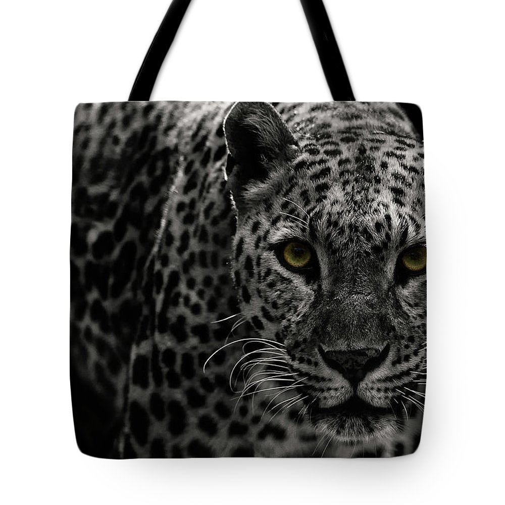 Big Cat Tote Bag featuring the photograph Leopard by Somak Pal
