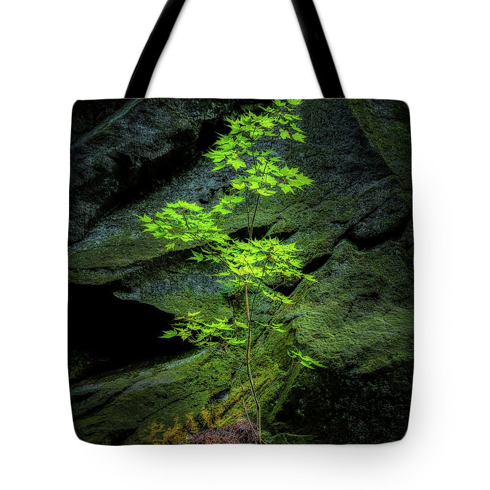 Tree Tote Bag featuring the photograph Life Will Find a Way by Tom Mc Nemar