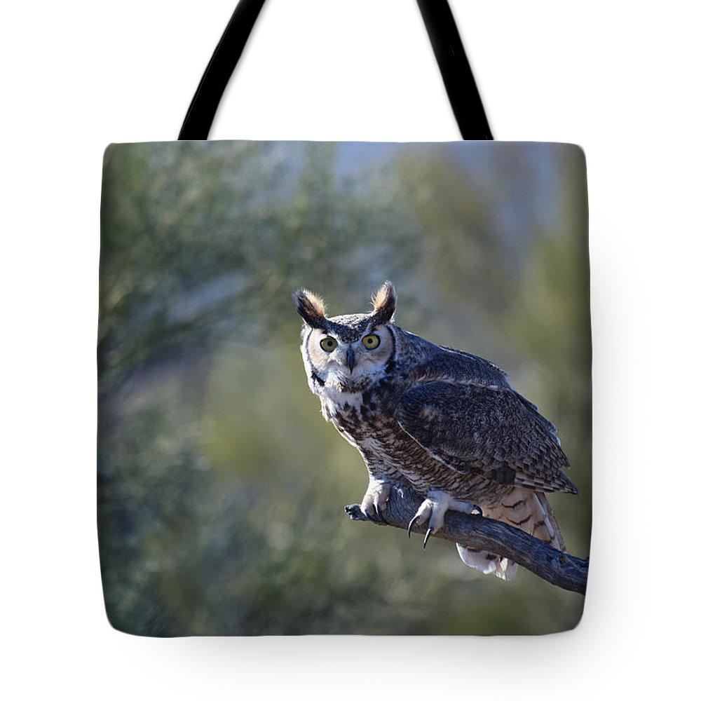 Owl Tote Bag featuring the photograph Life's A Hoot by Tashina Van Zwam