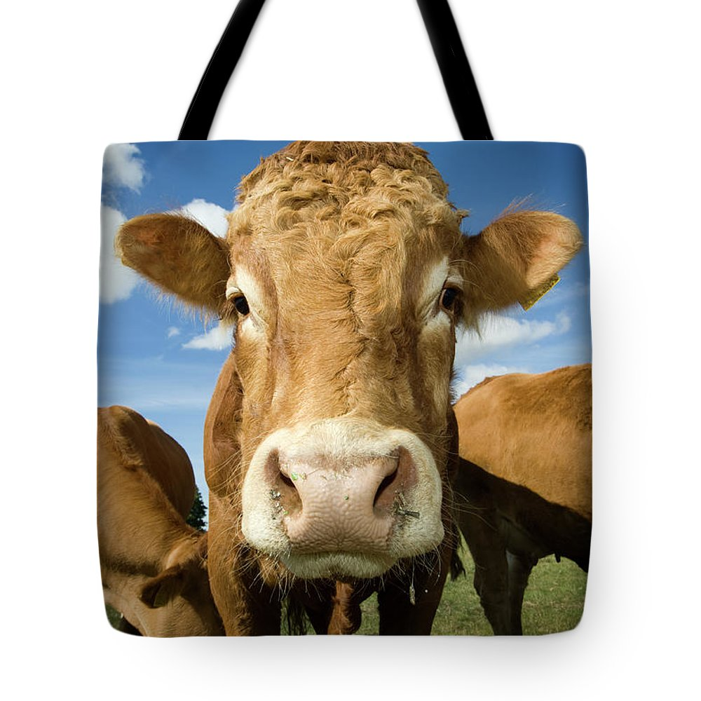 Cow Tote Bag featuring the photograph Limousin Bull by Clarkandcompany