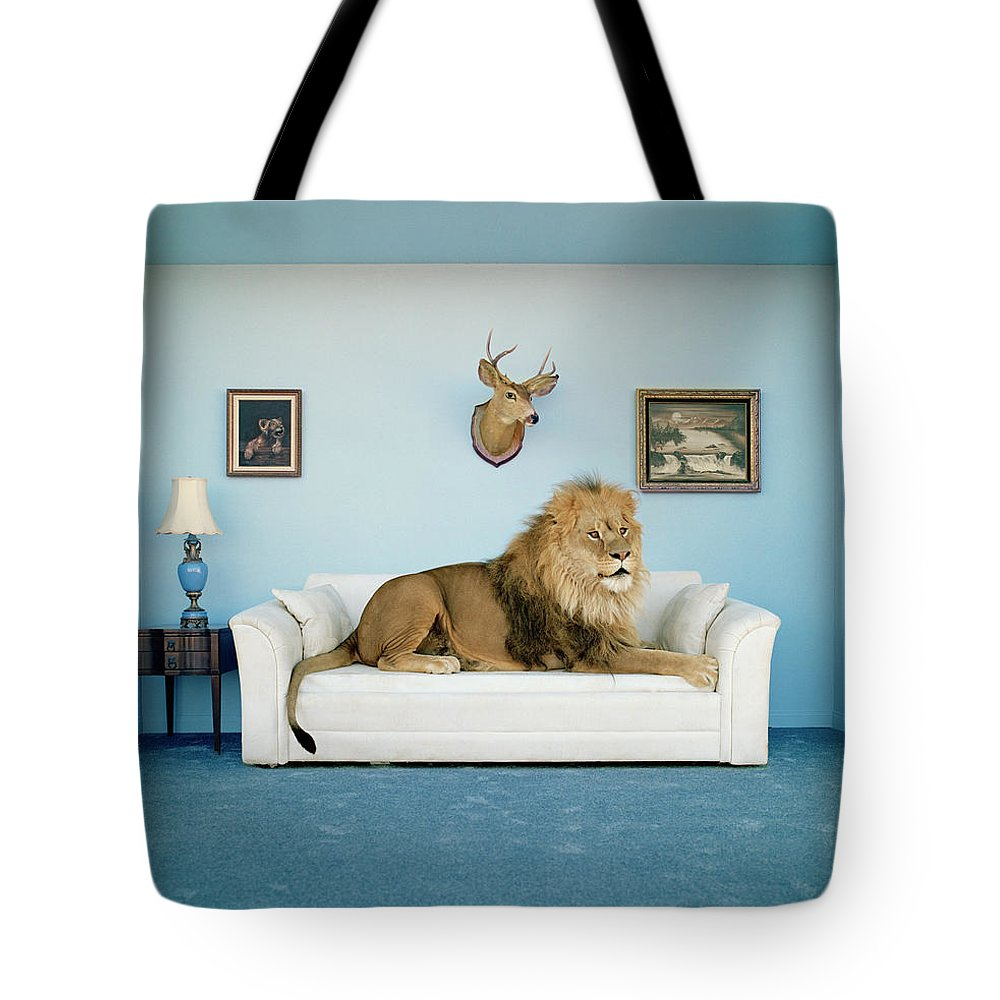 Pets Tote Bag featuring the photograph Lion Lying On Couch, Side View by Matthias Clamer