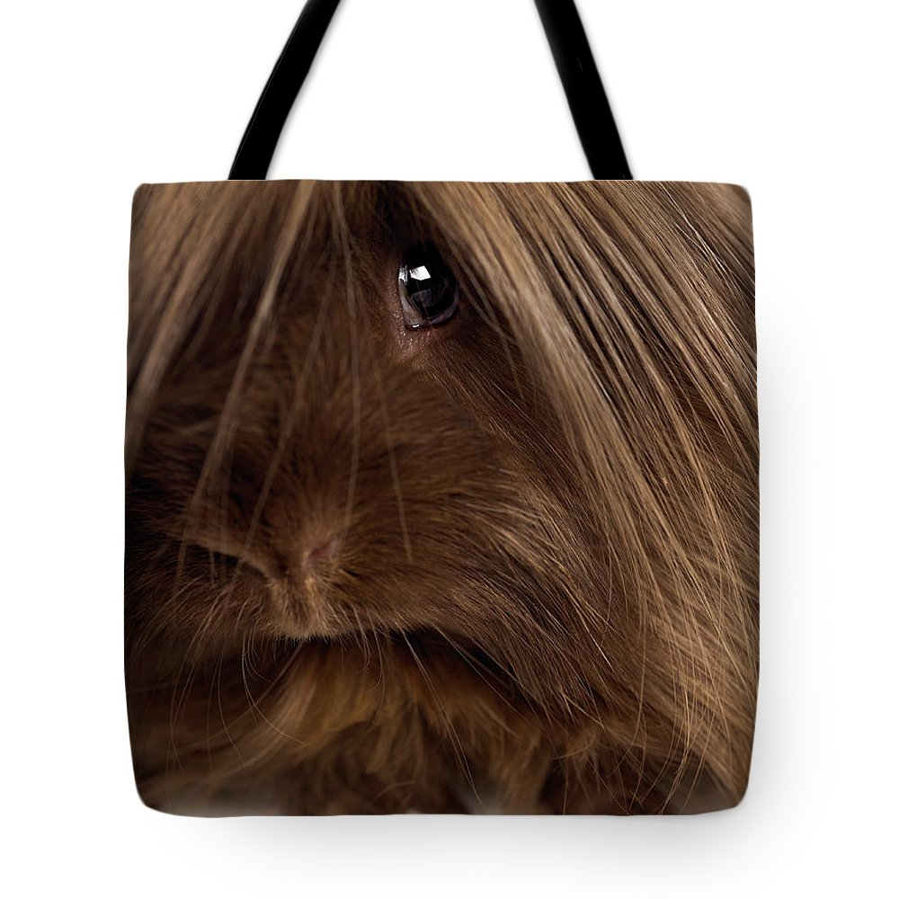 Pets Tote Bag featuring the photograph Long Haired Guinea Pig, Close-up by Michael Blann
