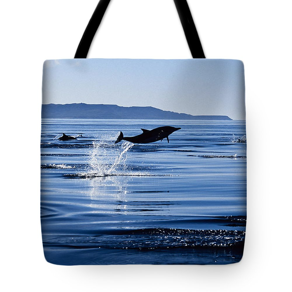 Latin America Tote Bag featuring the photograph Long-nosed Common Dolphin,delphinus by Gerard Soury