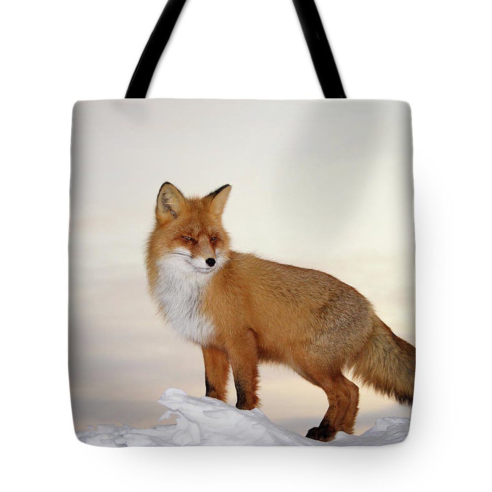 Black Color Tote Bag featuring the photograph Majestic Fox by Dmitrynd