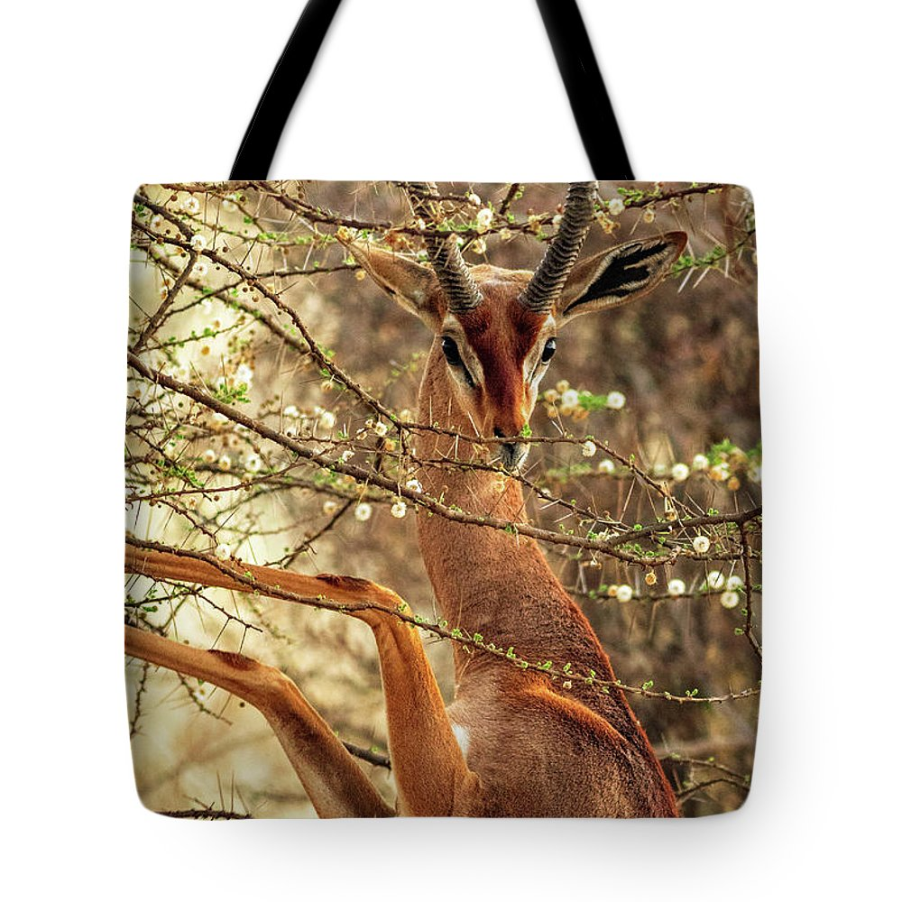 Gazelle Tote Bag featuring the photograph Male Gerenuk by Todd Bielby