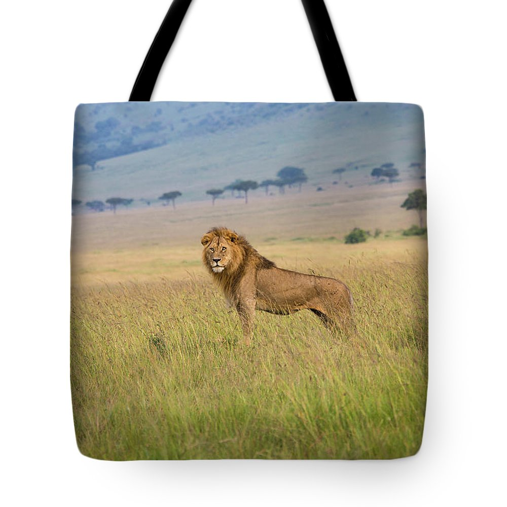 Kenya Tote Bag featuring the photograph Male Lion In The Savanna Masai Mara by Seppfriedhuber