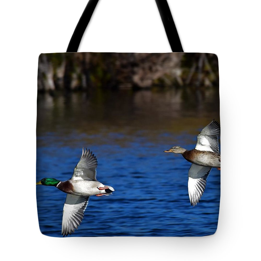 Ducks Tote Bag featuring the photograph Mallards Belly Up by Dwight Eddington
