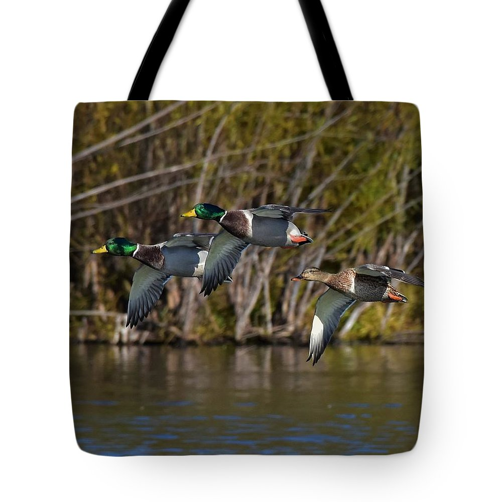 Ducks Tote Bag featuring the photograph Mallards Flying By by Dwight Eddington