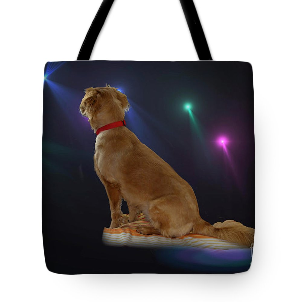 Mariposa Tote Bag featuring the photograph Mariposa In The Spotlight by Al Bourassa