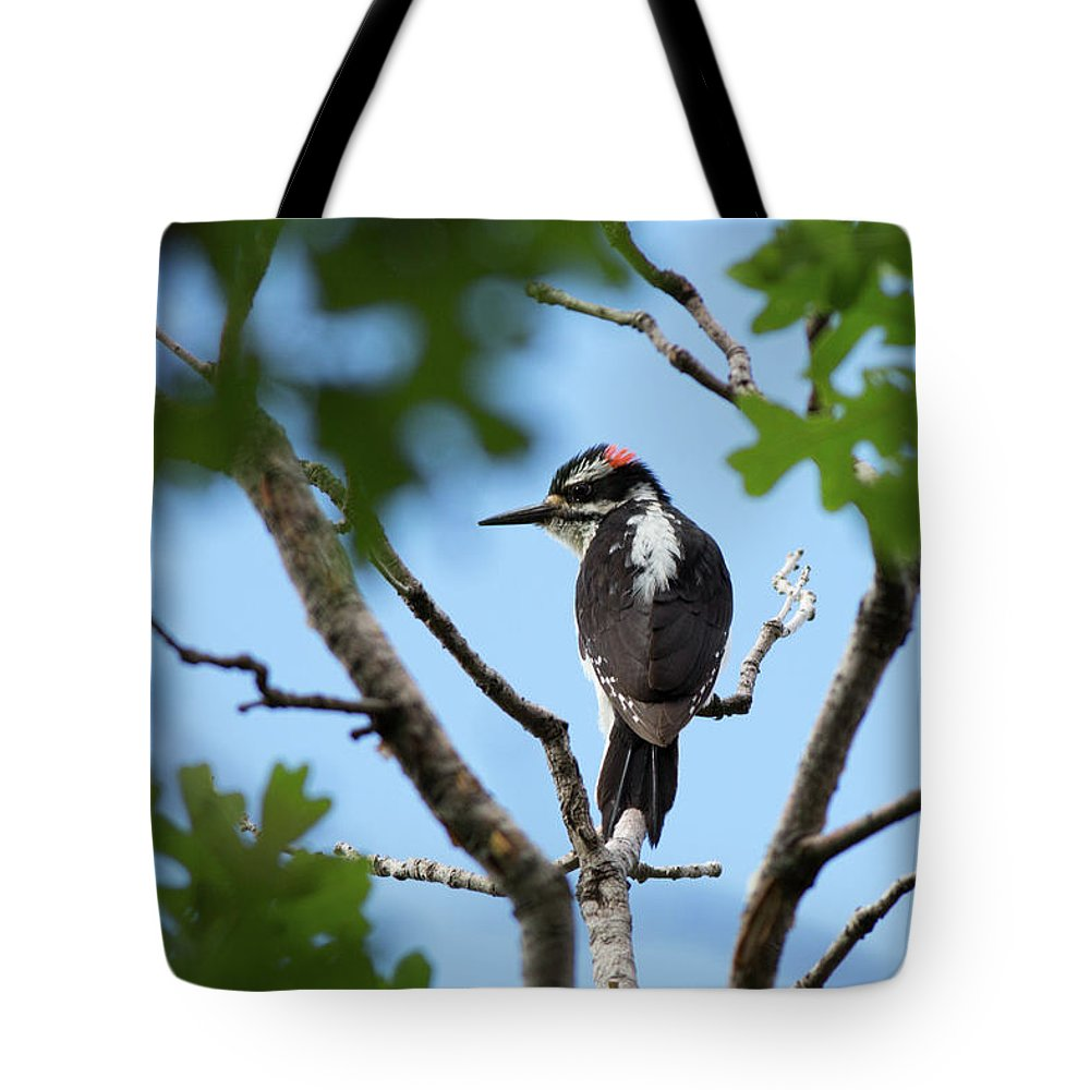 Woodpecker Tote Bag featuring the photograph Maxwell Woodpecker by Maria Jeffs