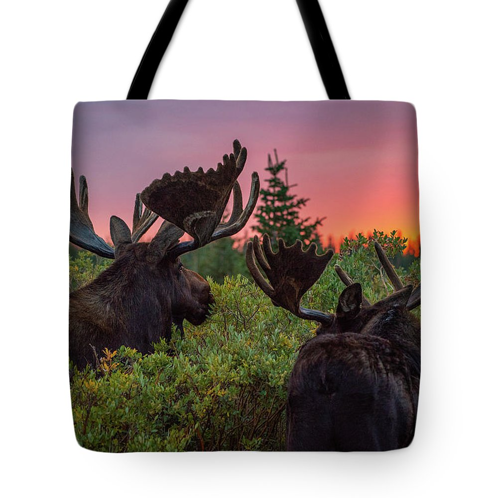 Moose Tote Bag featuring the photograph Mighty Giants Enjoy A Sunrise Breakfast by Gary Kochel