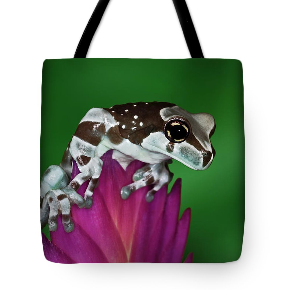 Animal Themes Tote Bag featuring the photograph Milk Frog, Trachycephalus Resinifictrix by Adam Jones