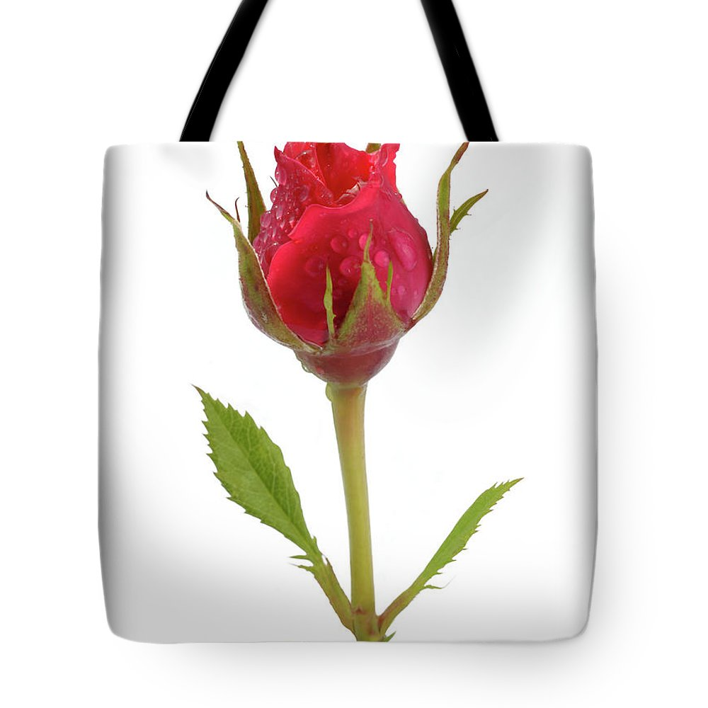 White Background Tote Bag featuring the photograph Miniature Pink Rose Bud With Water by Rosemary Calvert