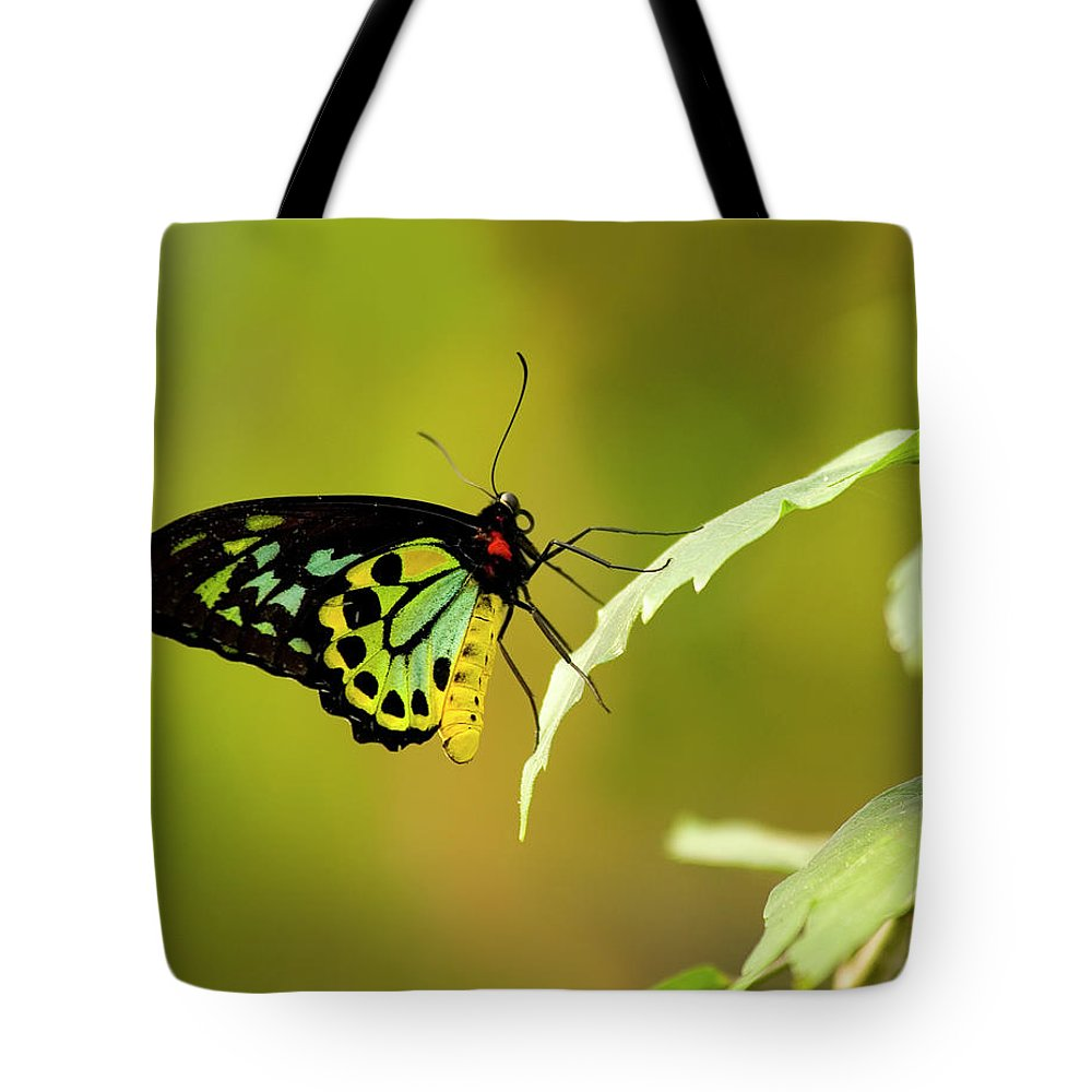 Photography Tote Bag featuring the photograph Monarch by Jeffrey PERKINS