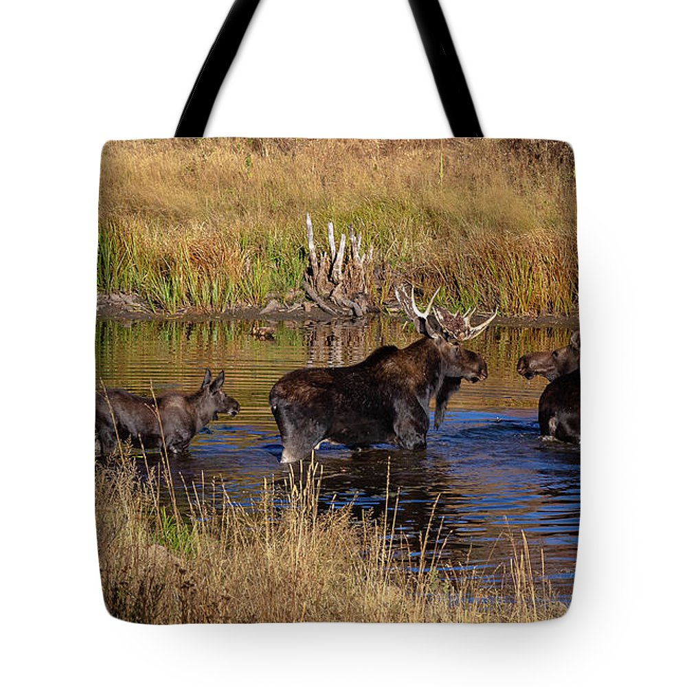 Trailsxposed Tote Bag featuring the photograph Moose At Green Pond by Gina Herbert