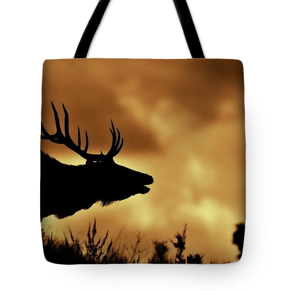 Animal Themes Tote Bag featuring the photograph Moose At Sunrise by Photo By James Keith