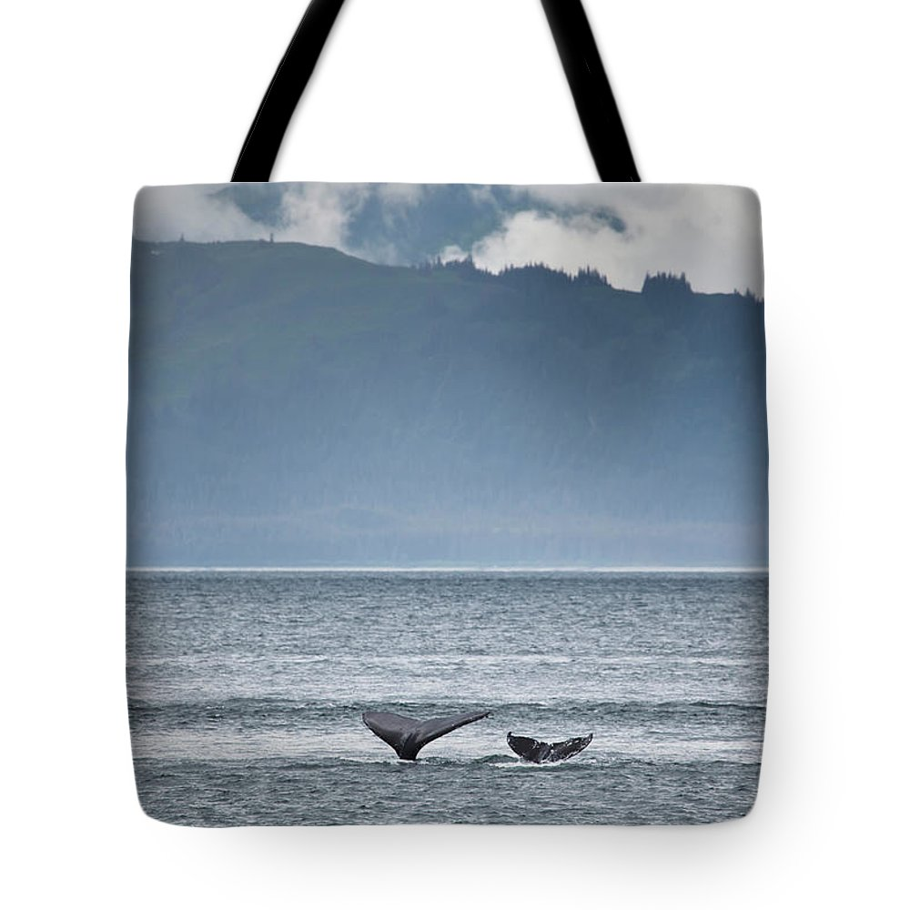 Water's Edge Tote Bag featuring the photograph Mother And Calf Whale Tails Megaptera by Blake Kent / Design Pics