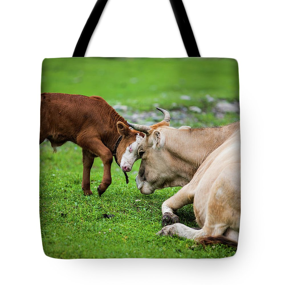 Grass Tote Bag featuring the photograph Mother And Son by Zhouyousifang