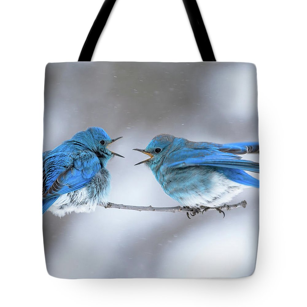 Blue Tote Bag featuring the photograph Mountain Bluebirds On A Snowy Day by Gary Kochel