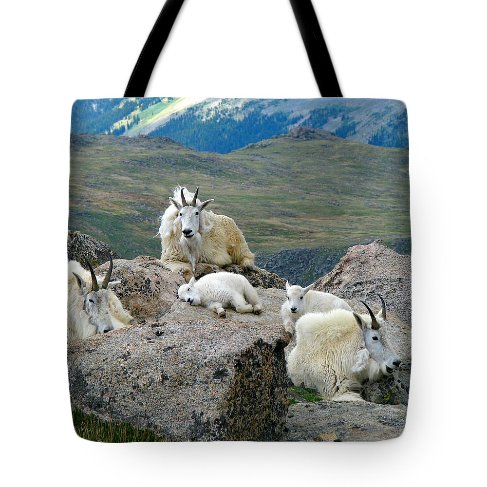 Horned Tote Bag featuring the photograph Mountain Goats In The Rocky Mountains by Carl Neufelder