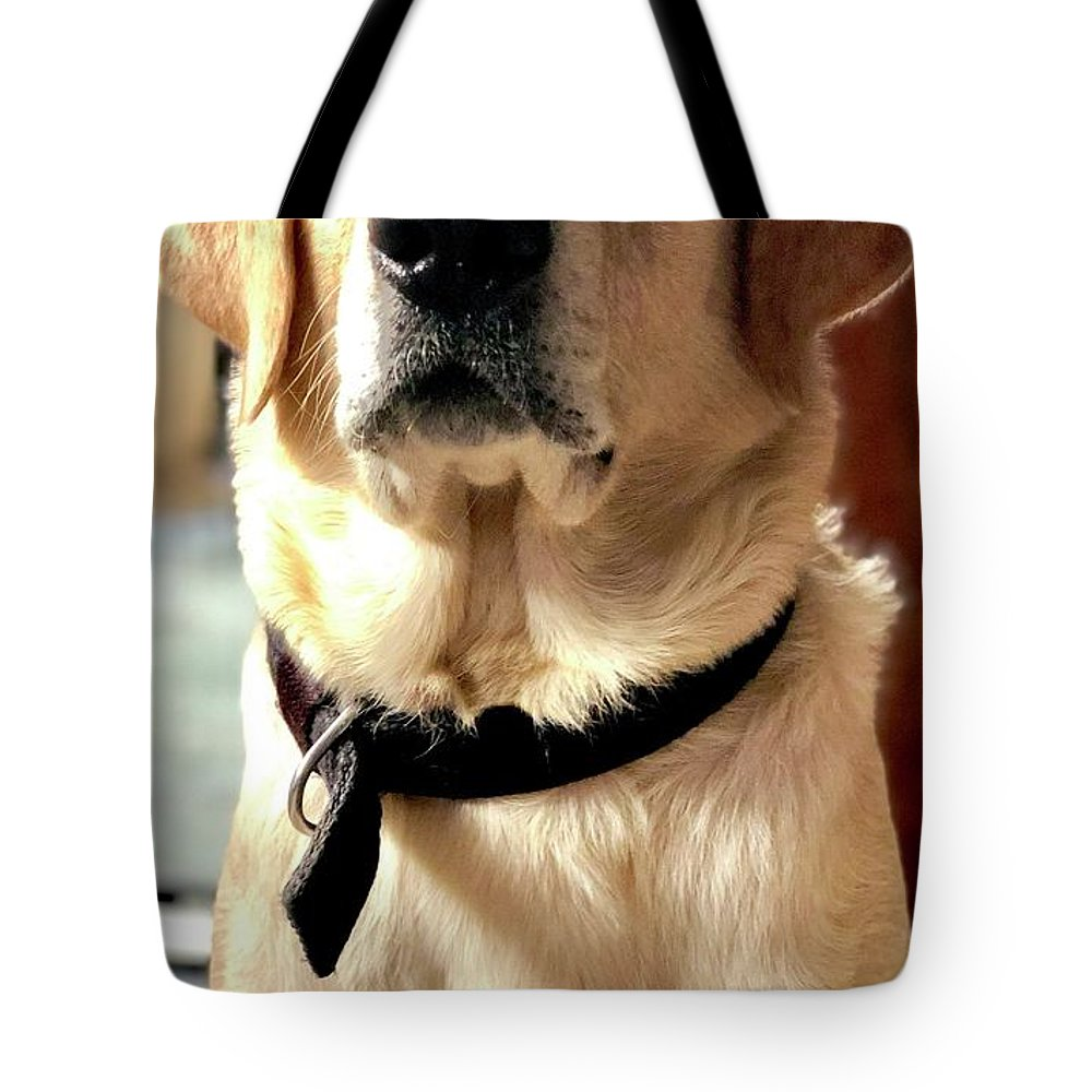 Labrador Dog Tote Bag featuring the photograph Labrador Dog by Arun Jain