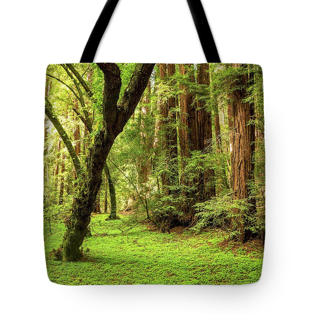 Tranquility Tote Bag featuring the photograph Muir Woods Forest by By Ryan Fernandez
