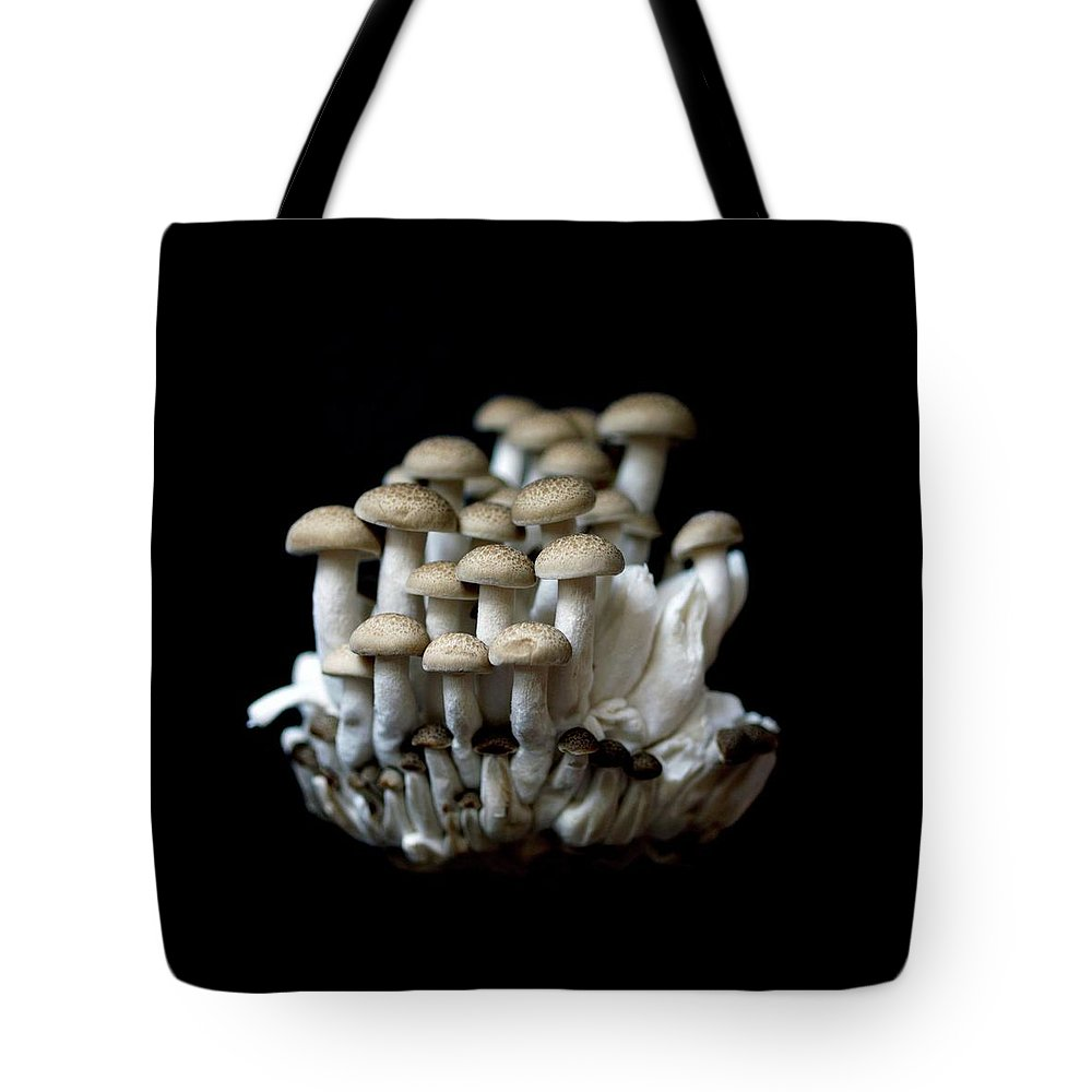 Edible Mushroom Tote Bag featuring the photograph Mushoom Against Black Background by Zachary Rathore